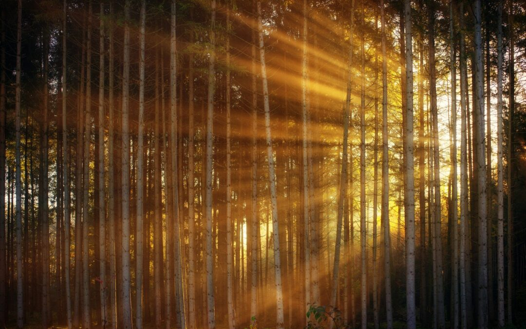 Rays of light filtered through a forest